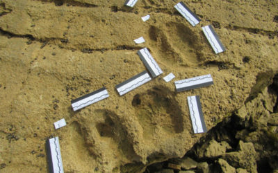 GCBR Flexible Micro Fund Grant: Given Banda and the Ichnology project